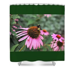 Shower Curtain featuring the photograph Cone Flowers And Bee by Sheila Brown