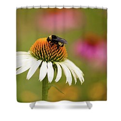 Coneflower And Bee Shower Curtain by Phyllis Peterson