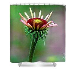 Coneflower Bloom Shower Curtain