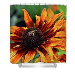 Coneflower  Shower Curtain by Eva Kaufman