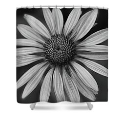 Coneflower In Black And White Shower Curtain