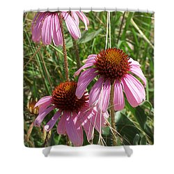 Coneflower Shower Curtain
