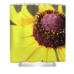 Coneflower Shower Curtain by Paul Drewry