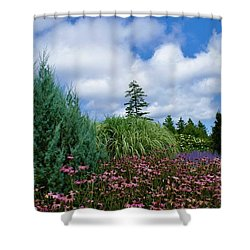 Coneflowers And Clouds Shower Curtain by Lois Lepisto