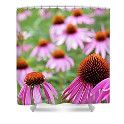 Coneflowers Shower Curtain by David Chandler