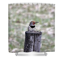 Shower Curtain featuring the photograph Confidence by Dorrene BrownButterfield