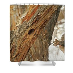 Construction Zone Shower Curtain by Donna Kennedy