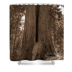 Contemplating Greatness Shower Curtain