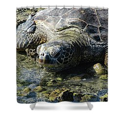 Shower Curtain featuring the photograph Contemplating by Pamela Walton
