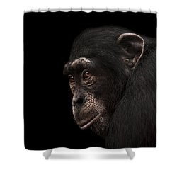 Contemplation Shower Curtain by Paul Neville