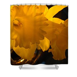 Contemporary Flower Artwork 10 Daffodil Flowers Evening Glow Shower Curtain by Baslee Troutman