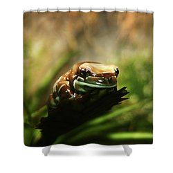 Shower Curtain featuring the photograph Content by Anthony Jones