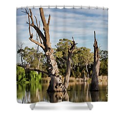 Contrasted Shower Curtain by Douglas Barnard