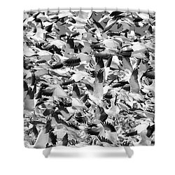 Shower Curtain featuring the photograph Controlled Chaos Bw by Everet Regal