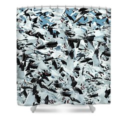 Shower Curtain featuring the photograph Controlled Chaos by Everet Regal