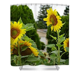 Conversing Sunflowers Shower Curtain