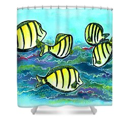 Convict Tang Fish #209 Shower Curtain by Donald k Hall