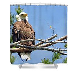 Shower Curtain featuring the photograph Cool Breeze by Glenn Gordon
