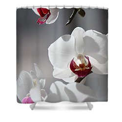 Shower Curtain featuring the photograph Cool Classiness by Silke Brubaker