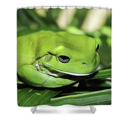 Cool Green Frog 001 Shower Curtain by Kevin Chippindall