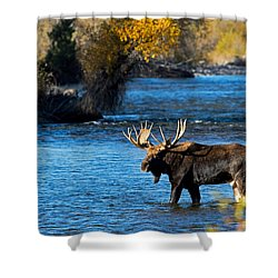 Cool Moose Shower Curtain
