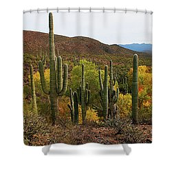 Coon Creek With Saguaros And Cottonwood, Ash, Sycamore Trees With Fall Colors Shower Curtain by Tom Janca