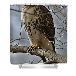 Cooper's Hawk 2 Shower Curtain by Joe Faherty