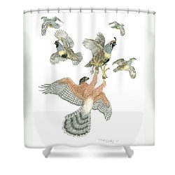 Cooper's Hawk And Gambels Quail Shower Curtain by Tim McCarthy