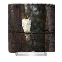 Shower Curtain featuring the photograph Cooper's Hawk by Clare VanderVeen