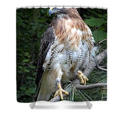 Coopers Hawk Shower Curtain by Dave Mills
