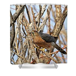 Shower Curtain featuring the photograph Cooper's Hawk by Donna Kennedy