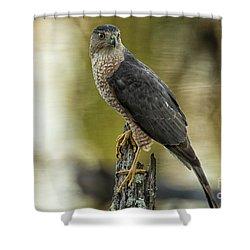 Cooper's Hawk Shower Curtain by Geraldine DeBoer
