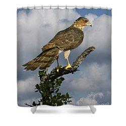 Cooper's Hawk On Watch Shower Curtain