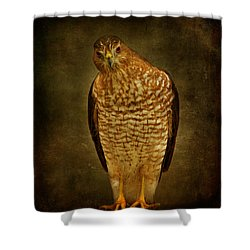 Coopers Hawk Shower Curtain by Sandy Keeton