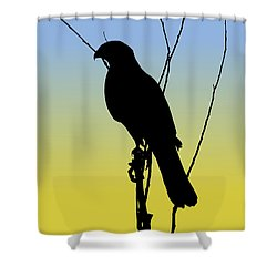 Coopers Hawk Silhouette At Sunrise Shower Curtain
