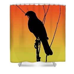 Coopers Hawk Silhouette At Sunset Shower Curtain
