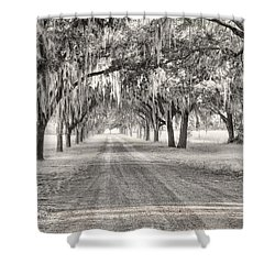 Coosaw Plantation Avenue Of Oaks Shower Curtain