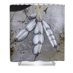 Coot Foot Shower Curtain