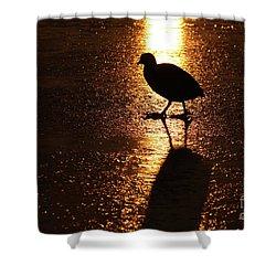 Coot Walks On Golden Ice  Shower Curtain