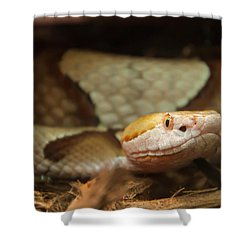 Shower Curtain featuring the digital art Copperhead by Chris Flees