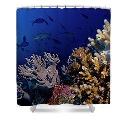 Shower Curtain featuring the photograph Coral And Fish by Rico Besserdich