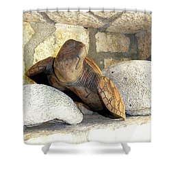 Shower Curtain featuring the photograph Coral And Turtle Decor by Francesca Mackenney