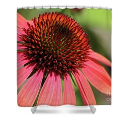 Coral Cone Flower Too Shower Curtain by Sabrina L Ryan