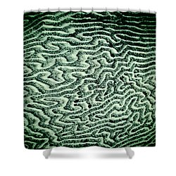 Coral Fossil Abstract -04 Shower Curtain
