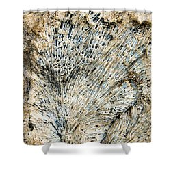 Coral Fossil Shower Curtain by Jean Noren