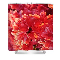 Coral Pink Azaleas Shower Curtain by Jan Amiss Photography