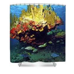 Coral Reef Scene, Calf Rock, Virgin Islands Shower Curtain