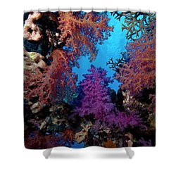 Shower Curtain featuring the photograph Coral Window by Rico Besserdich