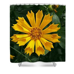 Coreopsis Jehtro Tull Shower Curtain