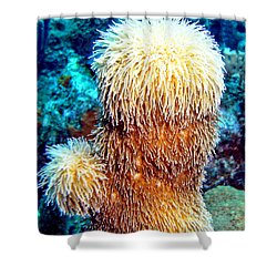 Corky Sea Finger Coral - The Muppet Of The Deep Shower Curtain by Amy McDaniel